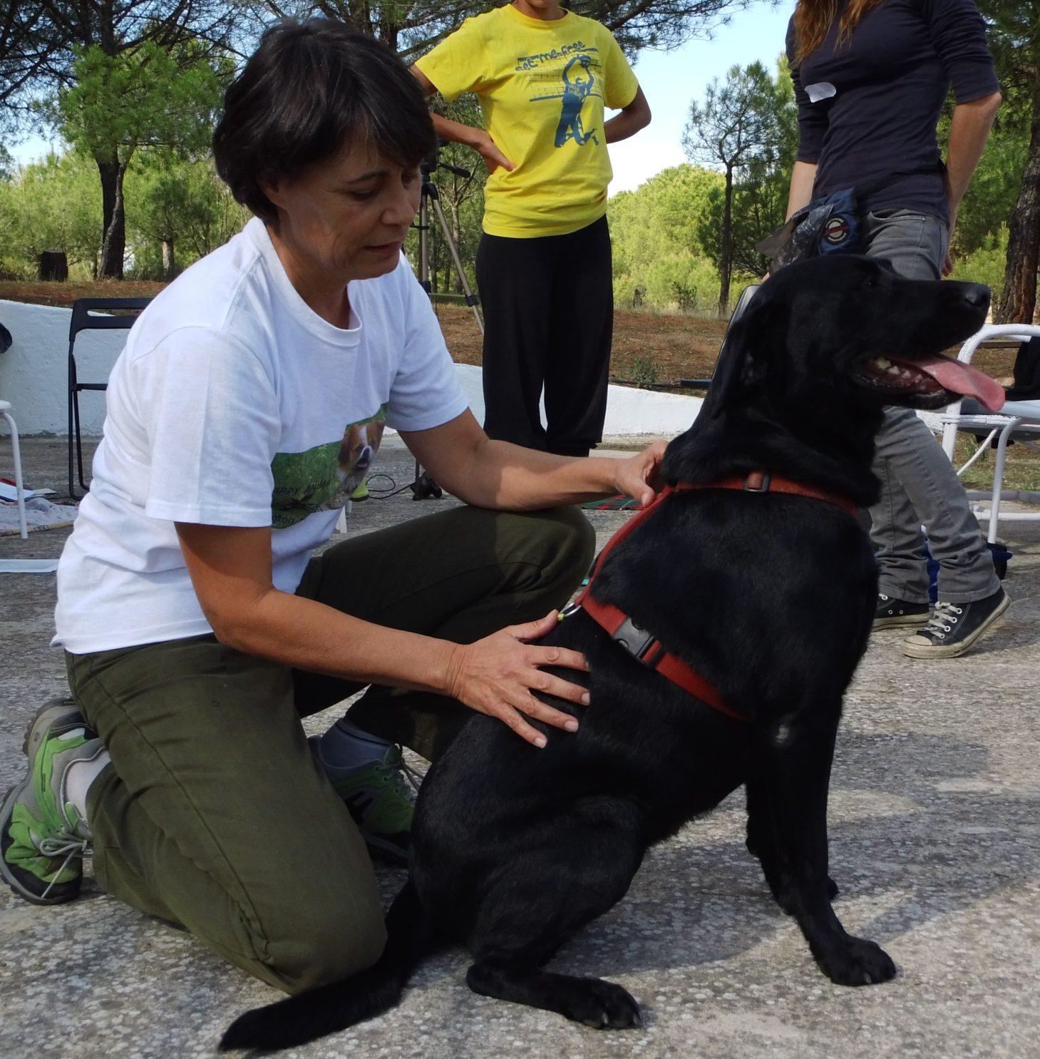 tocar el animal además hacer ejercicios de movimiento diferente ayuda a tu animal a relajarse