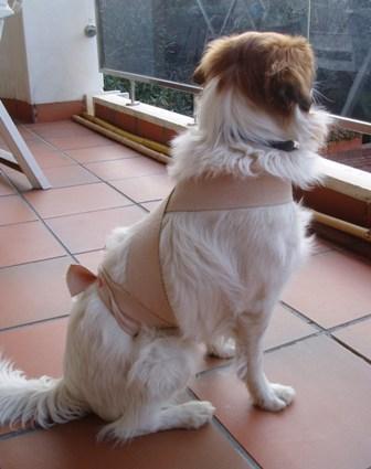 La venda corporal ttouch sobre un perro